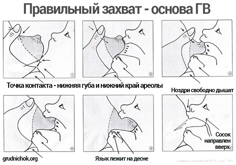 Правильный захват соска при грудном вскармливании