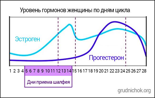 Схема приема шалфея для нормализации гормонального фона